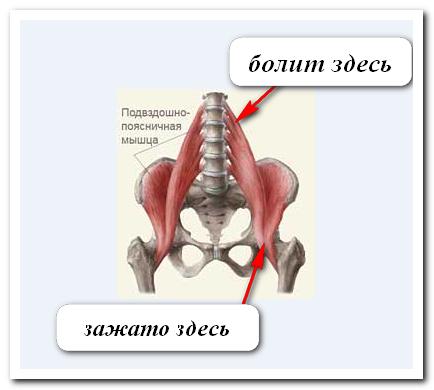 паразиты в животе человека видео